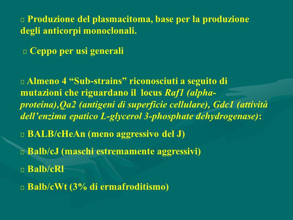 """ Produzione del plasmacitoma, base per la produzione degli anticorpi monoclonali.  Ceppo per usi generali  Almeno 4 """"Sub-strains"""" riconosciuti a se"""