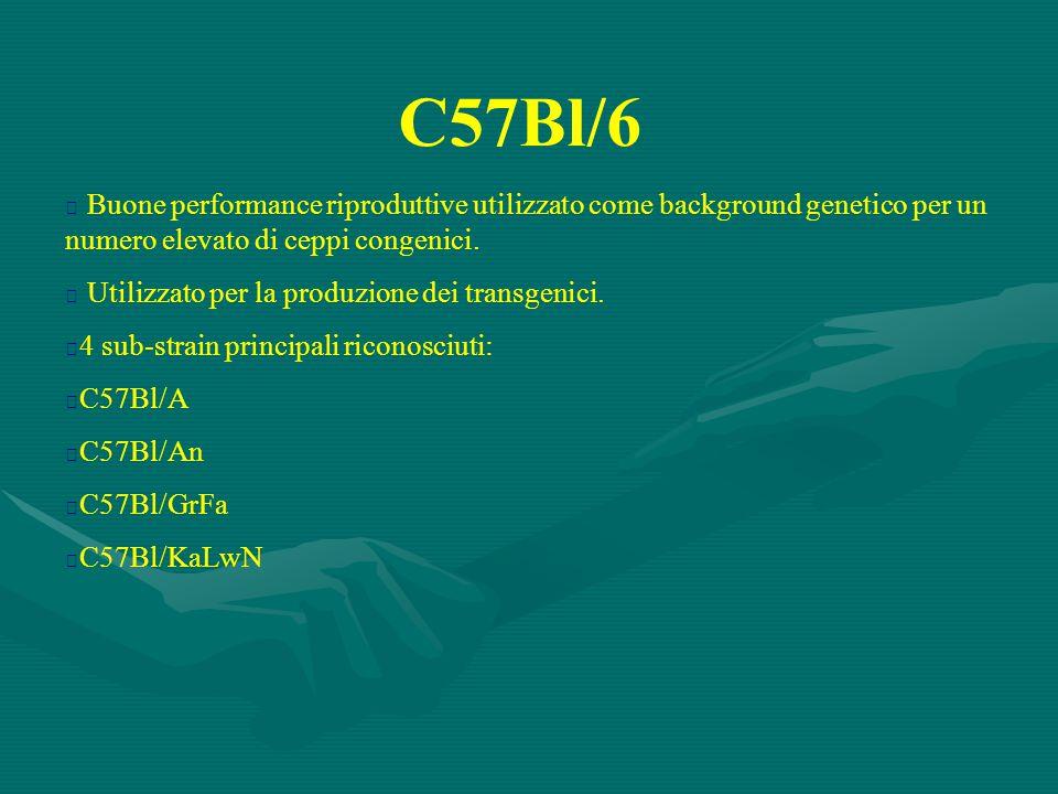 C57Bl/6  Buone performance riproduttive utilizzato come background genetico per un numero elevato di ceppi congenici.  Utilizzato per la produzione