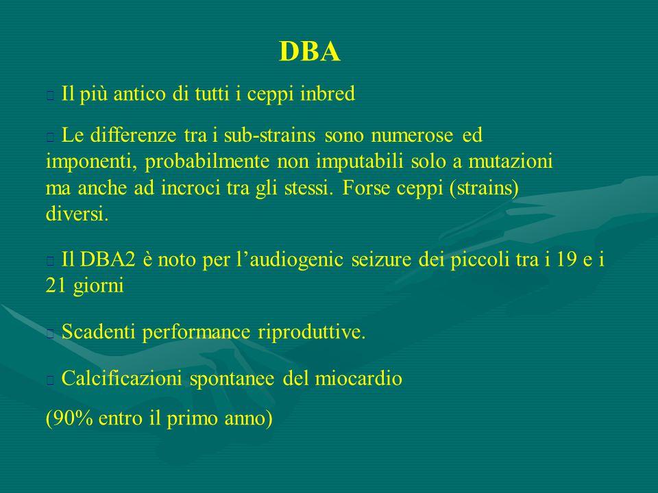 DBA  Il più antico di tutti i ceppi inbred  Le differenze tra i sub-strains sono numerose ed imponenti, probabilmente non imputabili solo a mutazion