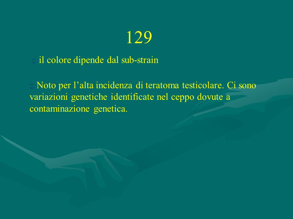 129  Noto per l'alta incidenza di teratoma testicolare. Ci sono variazioni genetiche identificate nel ceppo dovute a contaminazione genetica.  il co