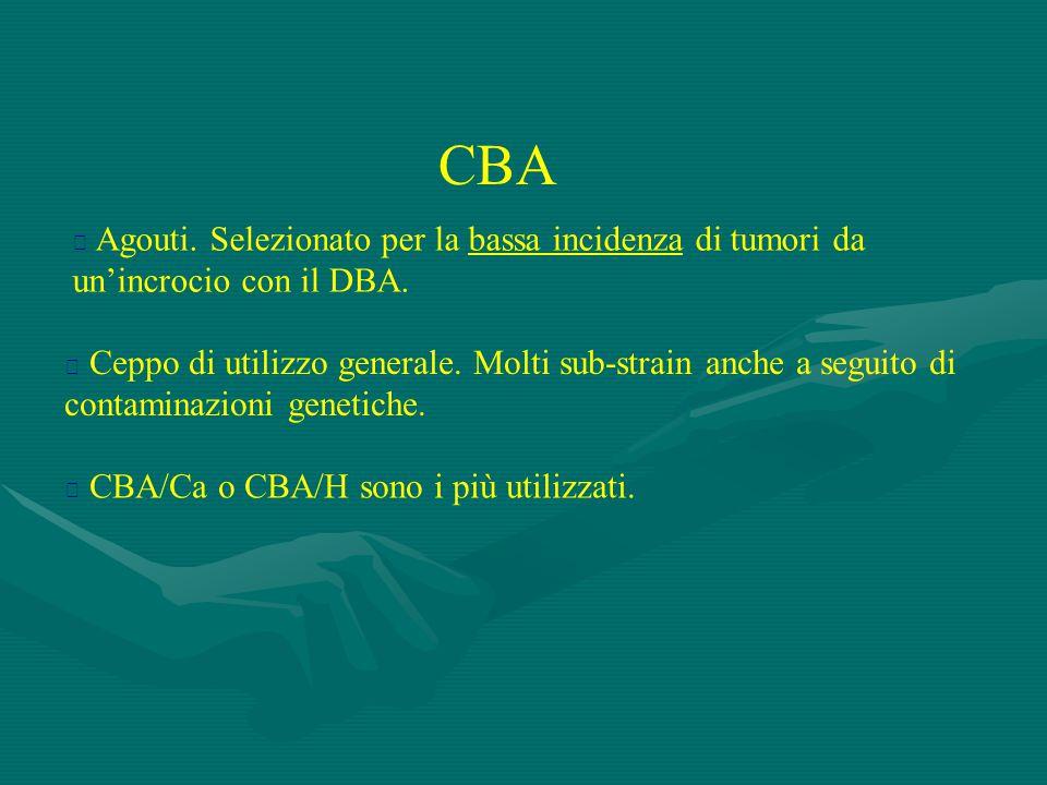 CBA  Agouti. Selezionato per la bassa incidenza di tumori da un'incrocio con il DBA.  Ceppo di utilizzo generale. Molti sub-strain anche a seguito d