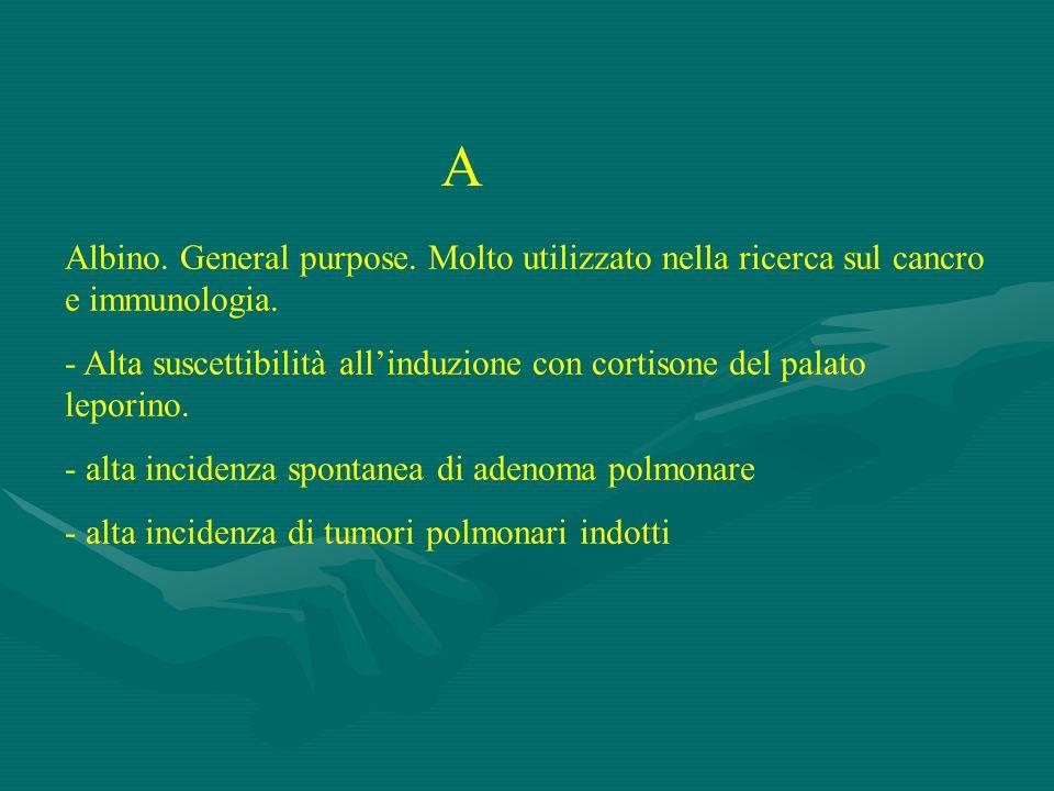 A Albino.General purpose. Molto utilizzato nella ricerca sul cancro e immunologia.