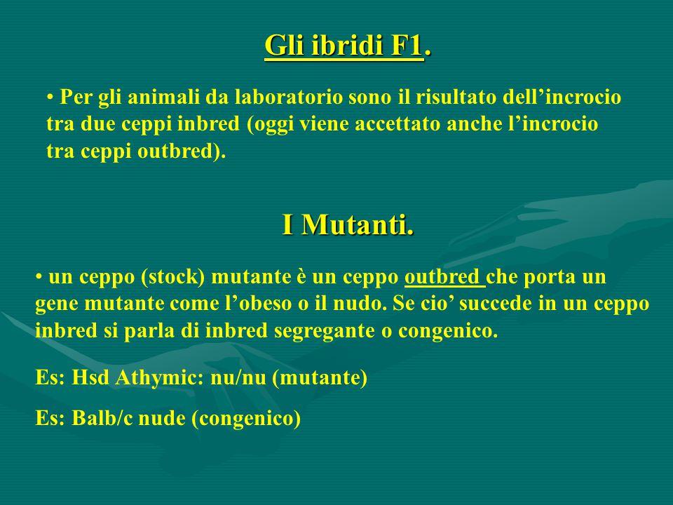 Gli ibridi F1. Per gli animali da laboratorio sono il risultato dell'incrocio tra due ceppi inbred (oggi viene accettato anche l'incrocio tra ceppi ou