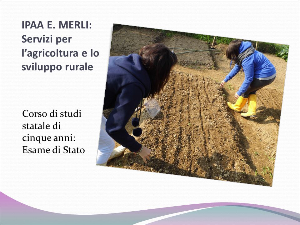 IPAA E. MERLI: Servizi per l'agricoltura e lo sviluppo rurale Corso di studi statale di cinque anni: Esame di Stato