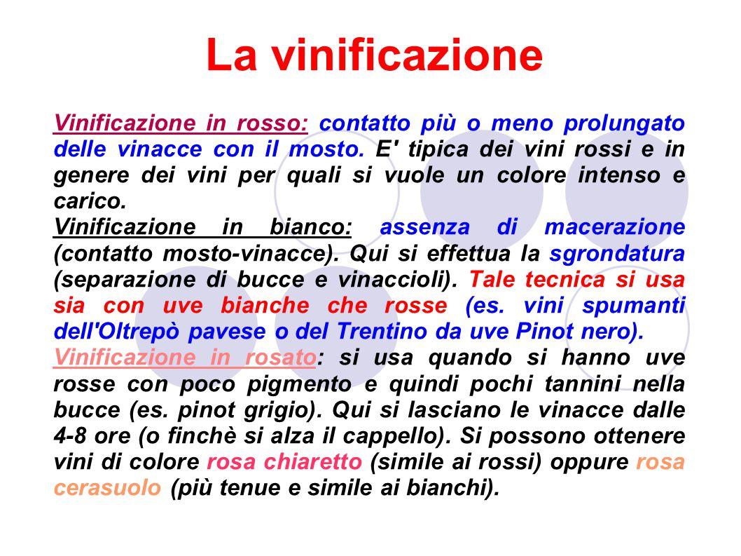 La vinificazione Vinificazione in rosso: contatto più o meno prolungato delle vinacce con il mosto.