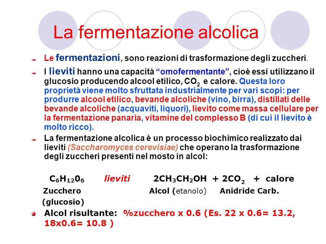 La fermentazione alcolica Le fermentazioni, sono reazioni di trasformazione degli zuccheri.