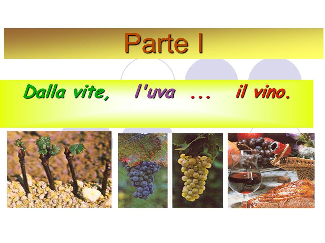 Parte I Dalla vite, l uva... il vino.