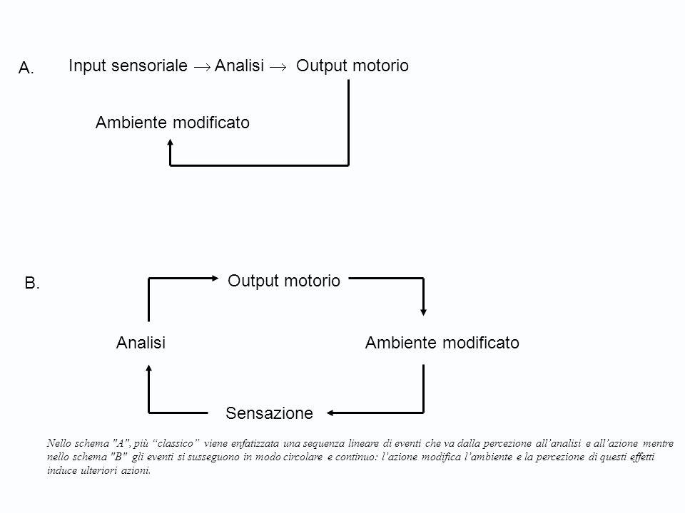 Ambiente modificato Output motorio Analisi Ambiente modificato Nello schema A , più classico viene enfatizzata una sequenza lineare di eventi che va dalla percezione all'analisi e all'azione mentre nello schema B gli eventi si susseguono in modo circolare e continuo: l'azione modifica l'ambiente e la percezione di questi effetti induce ulteriori azioni.