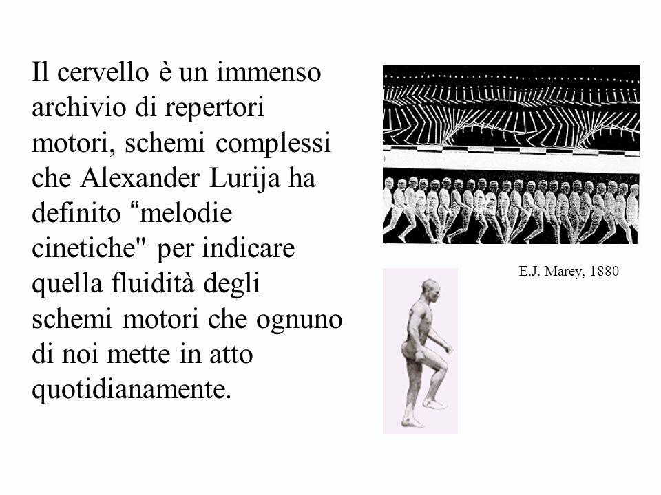 """Il cervello è un immenso archivio di repertori motori, schemi complessi che Alexander Lurija ha definito """" melodie cinetiche"""