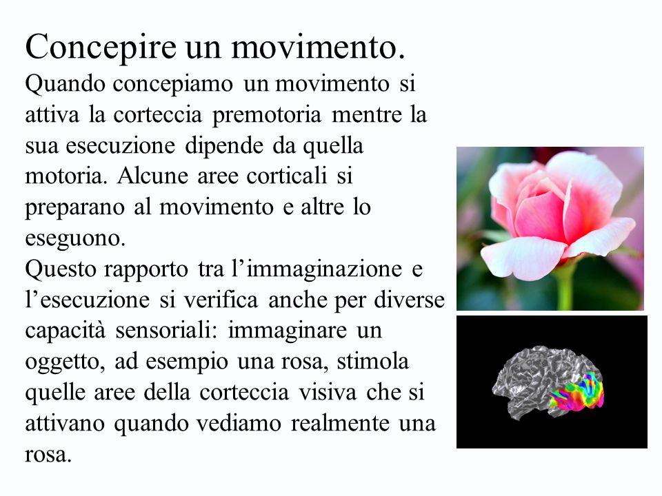 Concepire un movimento. Quando concepiamo un movimento si attiva la corteccia premotoria mentre la sua esecuzione dipende da quella motoria. Alcune ar