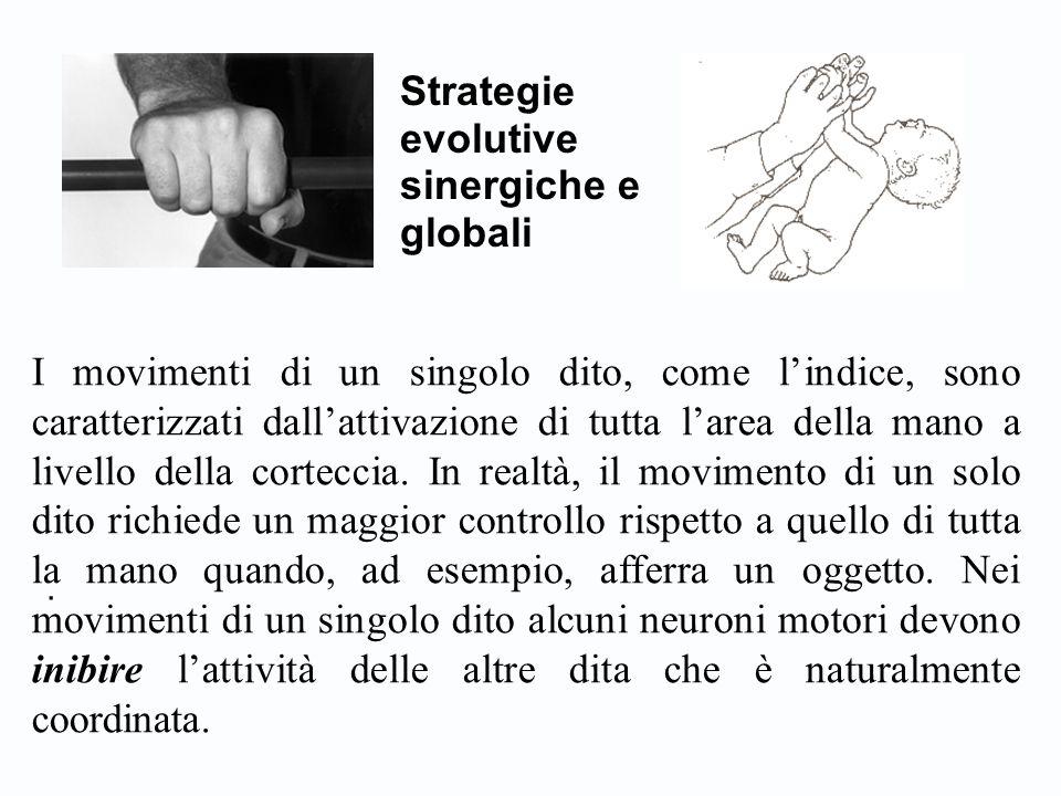 . Strategie evolutive sinergiche e globali I movimenti di un singolo dito, come l'indice, sono caratterizzati dall'attivazione di tutta l'area della m