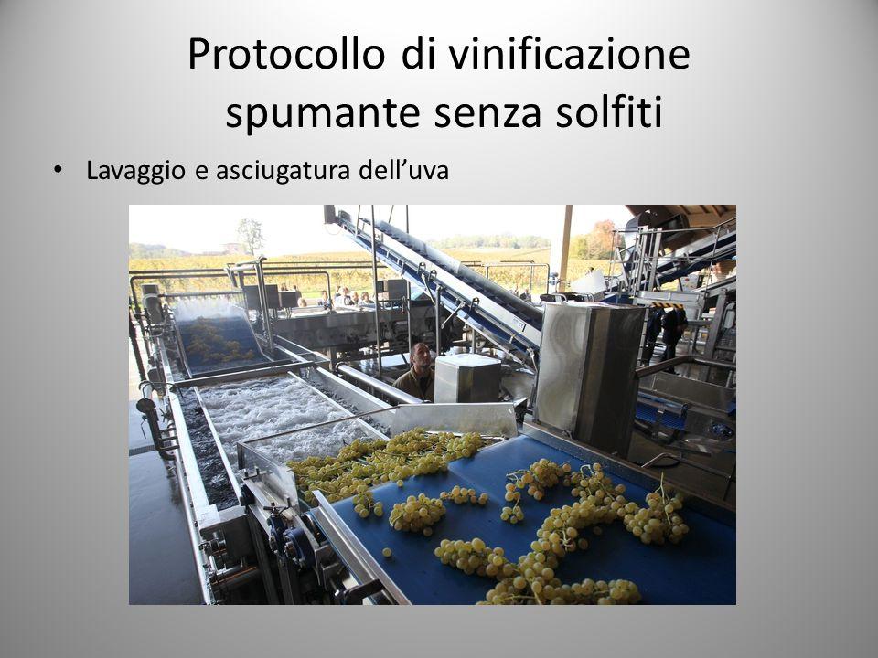 Protocollo di vinificazione spumante senza solfiti Lavaggio e asciugatura dell'uva