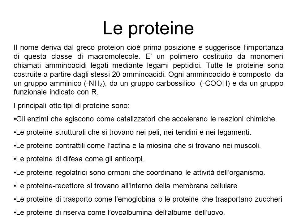 Le proteine Il nome deriva dal greco proteion cioè prima posizione e suggerisce l'importanza di questa classe di macromolecole. E' un polimero costitu