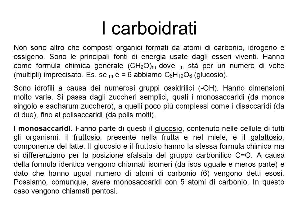 I carboidrati Non sono altro che composti organici formati da atomi di carbonio, idrogeno e ossigeno. Sono le principali fonti di energia usate dagli