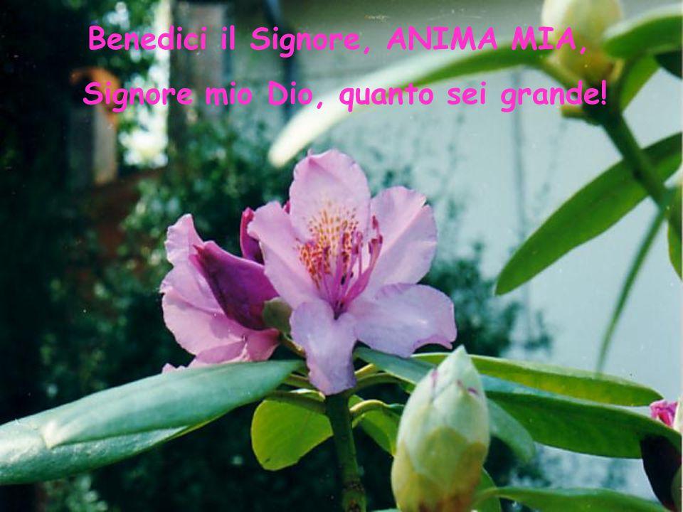 Gli splendori della creazione Salmo 104(103) A cura del Monastero Santa Margherita in Fabriano Foto: Suor Gabriella PDDM