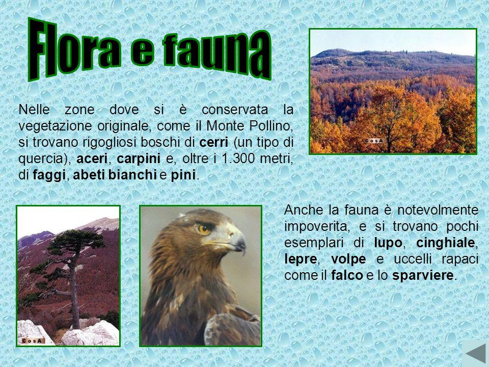 Nelle zone dove si è conservata la vegetazione originale, come il Monte Pollino, si trovano rigogliosi boschi di cerri (un tipo di quercia), aceri, ca