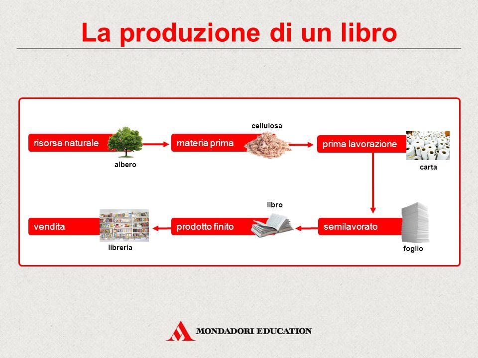 La produzione di un libro albero cellulosa carta libro prima lavorazione semilavoratoprodotto finitovendita materia primarisorsa naturale libreria foglio