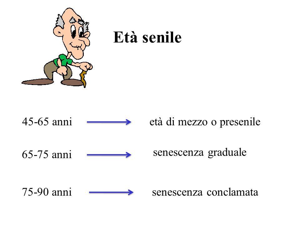 Età senile 45-65 anni 65-75 anni 75-90 anni età di mezzo o presenile senescenza graduale senescenza conclamata