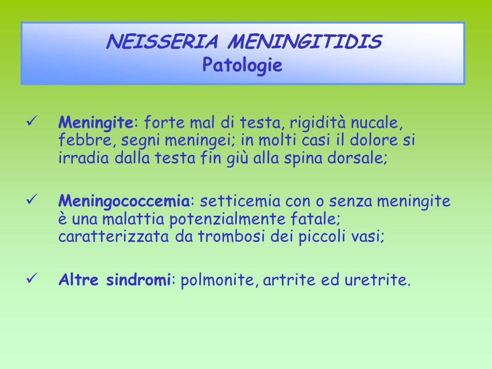 Meningite: forte mal di testa, rigidità nucale, febbre, segni meningei; in molti casi il dolore si irradia dalla testa fin giù alla spina dorsale; Men