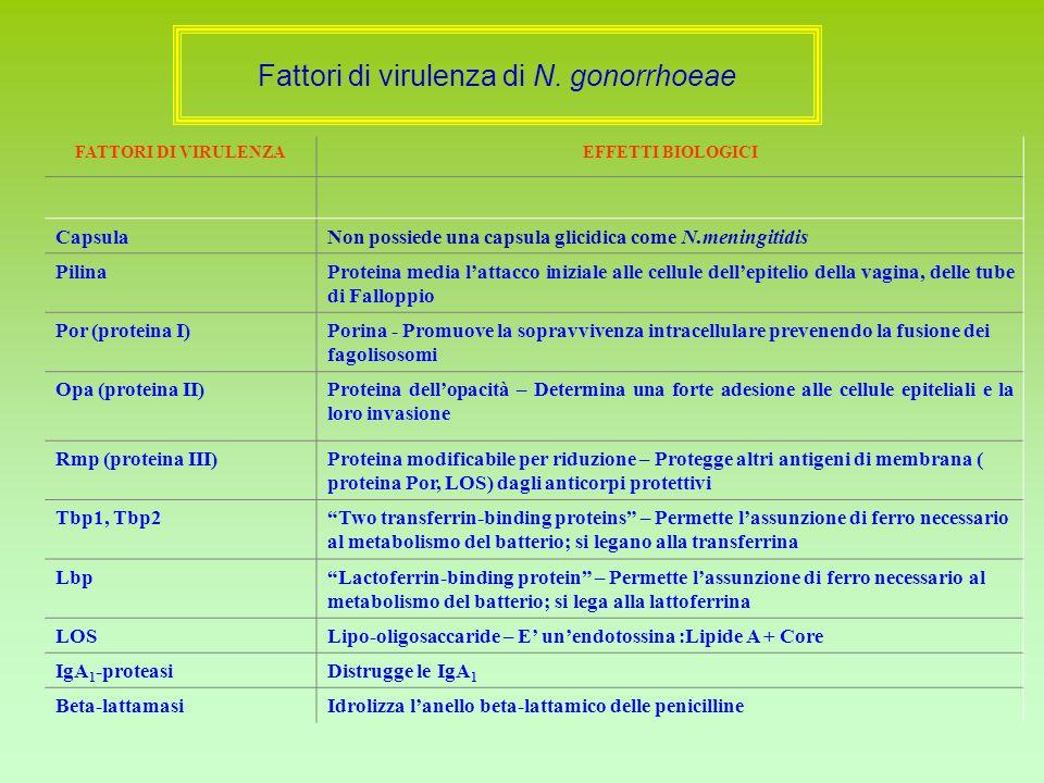 Fattori di virulenza di N. gonorrhoeae FATTORI DI VIRULENZAEFFETTI BIOLOGICI CapsulaNon possiede una capsula glicidica come N.meningitidis PilinaProte