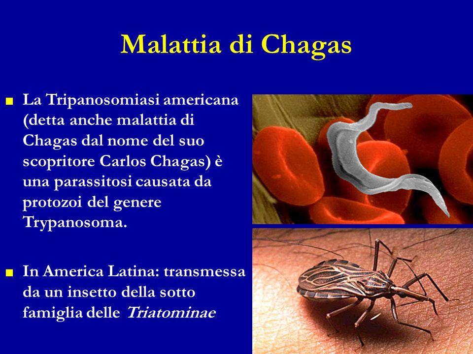 Malattia di Chagas ■ La Tripanosomiasi americana (detta anche malattia di Chagas dal nome del suo scopritore Carlos Chagas) è una parassitosi causata