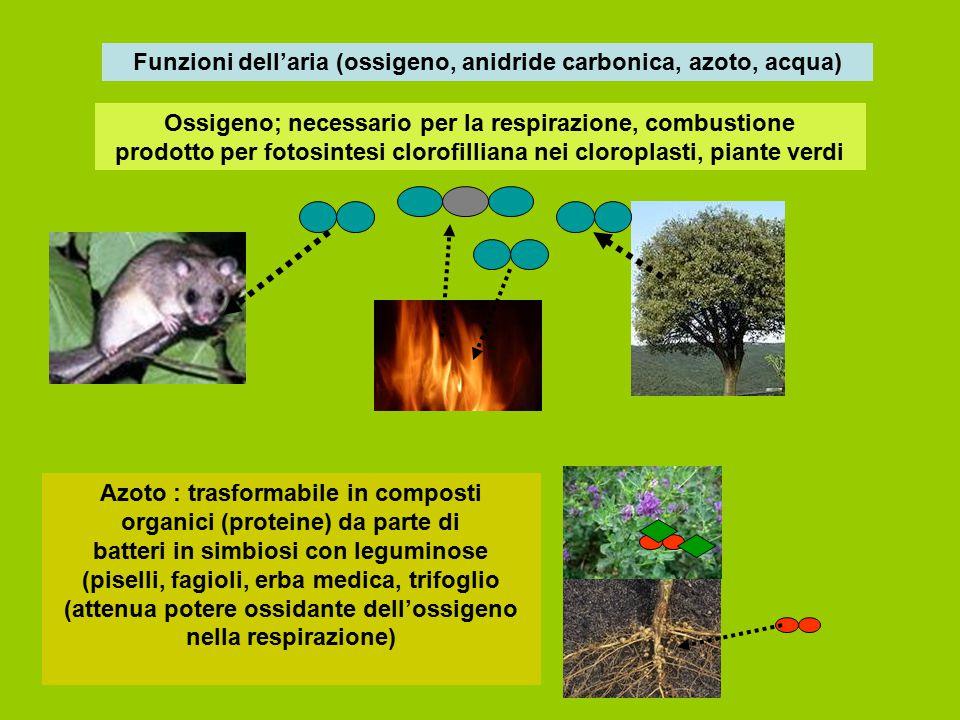 Funzioni dell'aria (ossigeno, anidride carbonica, azoto, acqua) Ossigeno; necessario per la respirazione, combustione prodotto per fotosintesi clorofi