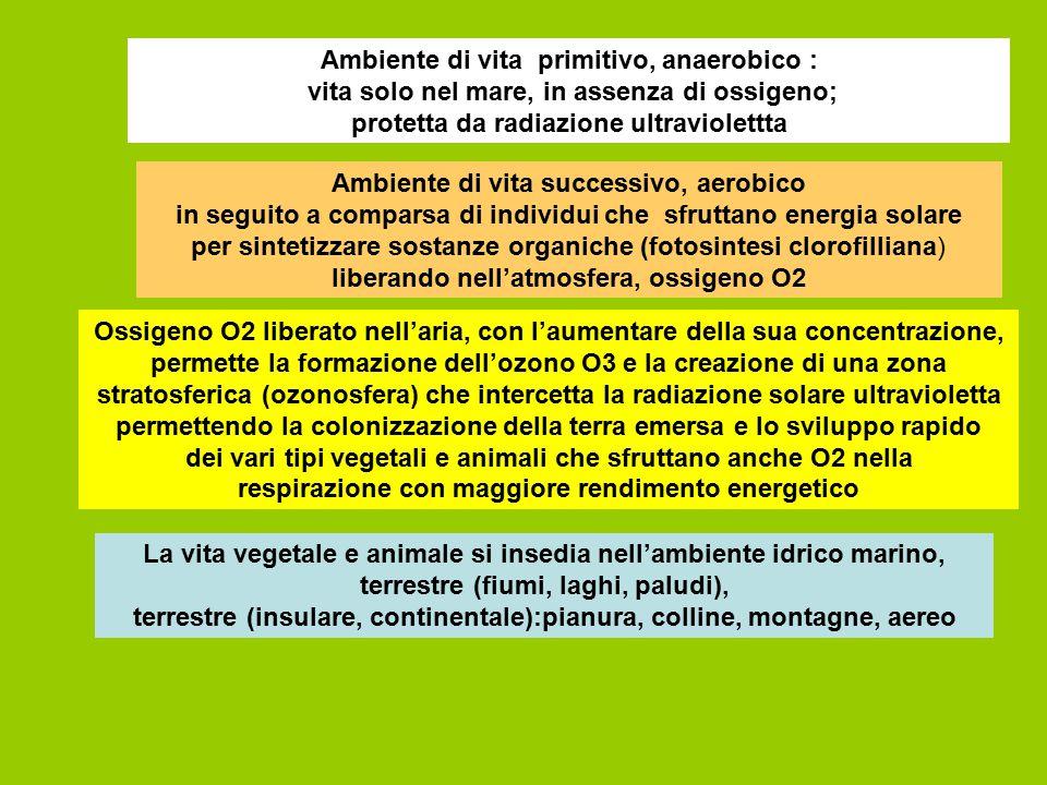 Ambiente di vita primitivo, anaerobico : vita solo nel mare, in assenza di ossigeno; protetta da radiazione ultraviolettta Ambiente di vita successivo