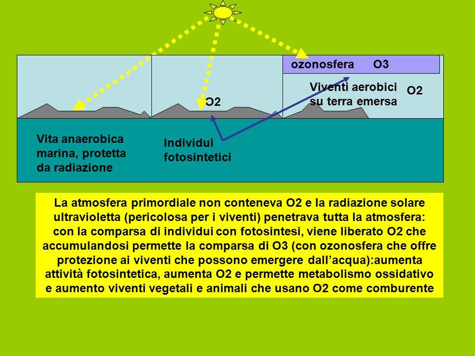 Vita anaerobica marina, protetta da radiazione Individui fotosintetici O2 ozonosfera Viventi aerobici su terra emersa La atmosfera primordiale non con