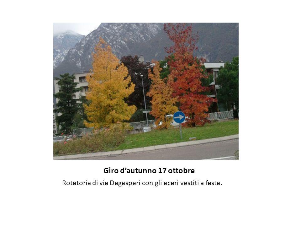 Giro d'autunno 17 ottobre Rotatoria di via Degasperi con gli aceri vestiti a festa.