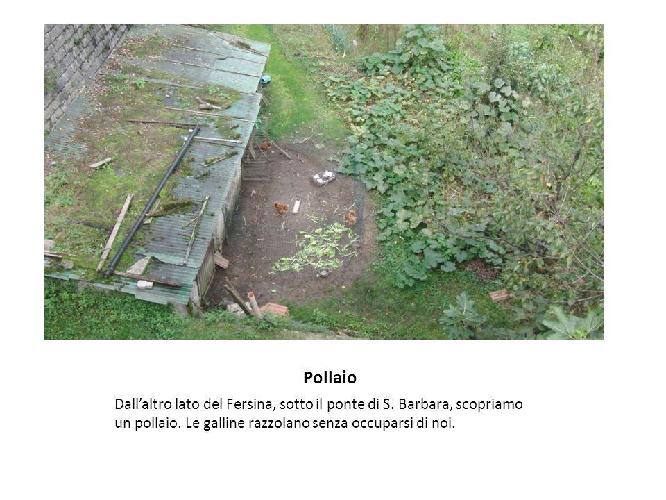 Pollaio Dall'altro lato del Fersina, sotto il ponte di S. Barbara, scopriamo un pollaio. Le galline razzolano senza occuparsi di noi.