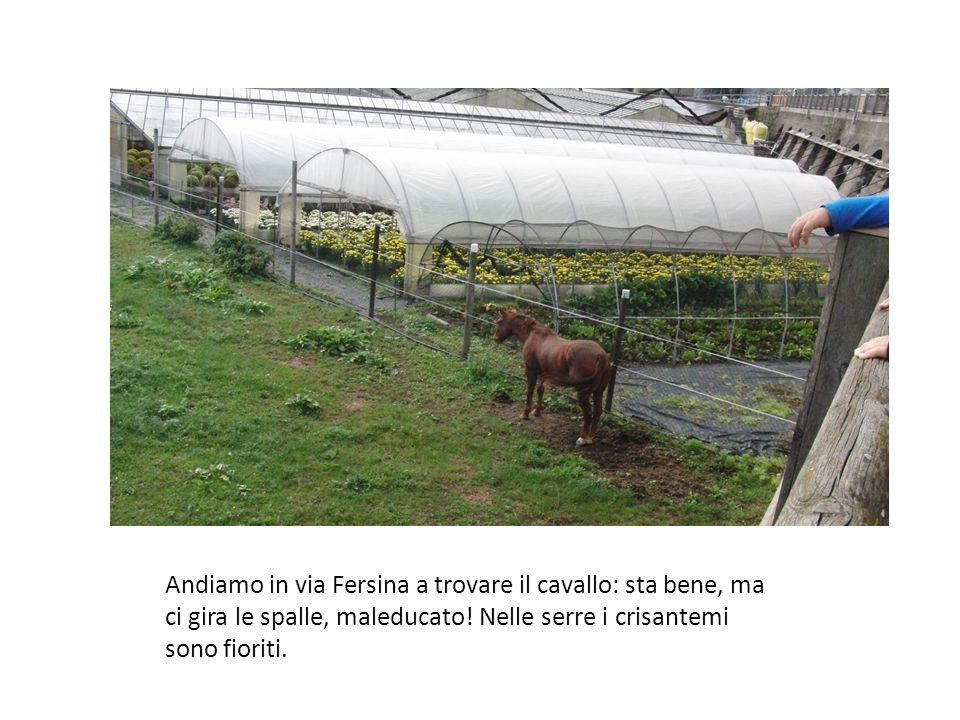 Andiamo in via Fersina a trovare il cavallo: sta bene, ma ci gira le spalle, maleducato! Nelle serre i crisantemi sono fioriti.