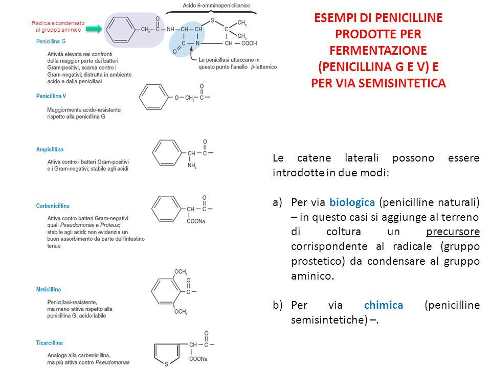ESEMPI DI PENICILLINE PRODOTTE PER FERMENTAZIONE (PENICILLINA G E V) E PER VIA SEMISINTETICA Radicale condensato al gruppo aminico Le catene laterali