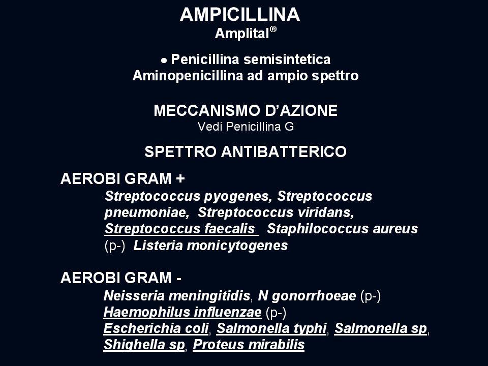 AMPICILLINA