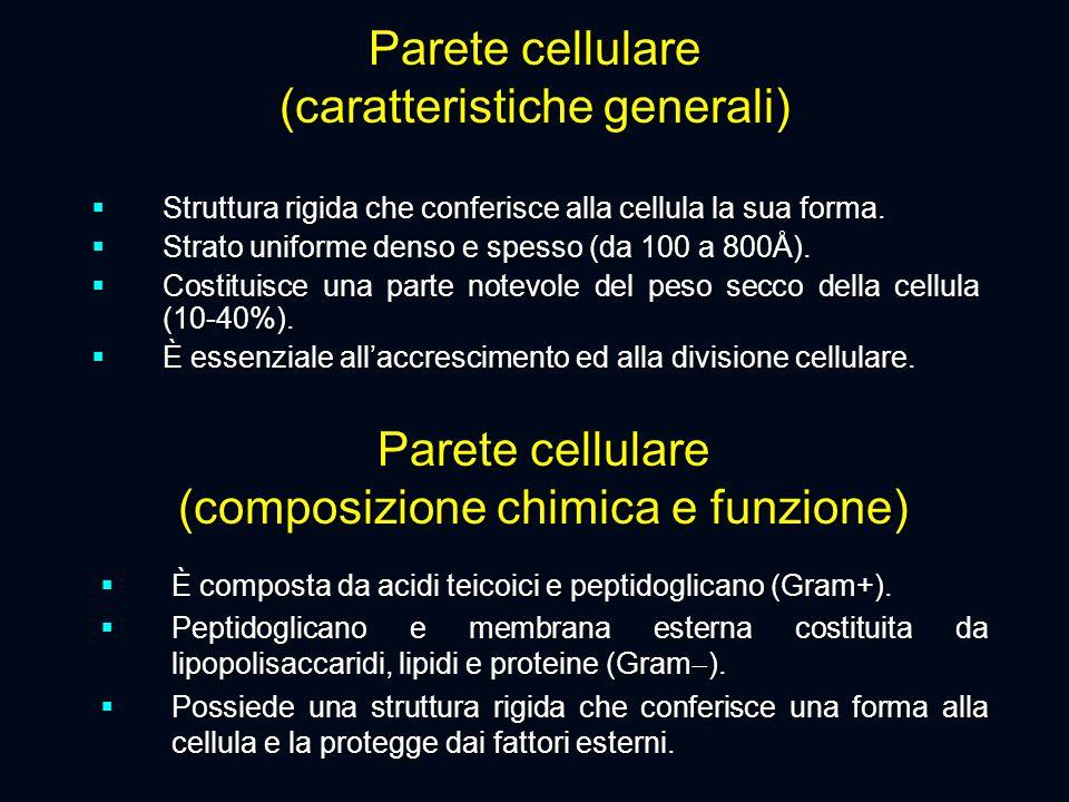 Parete cellulare (composizione chimica e funzione)  È composta da acidi teicoici e peptidoglicano (Gram+).  Peptidoglicano e membrana esterna costit