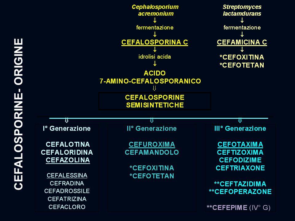 CEFALOSPORINE- ORIGINE