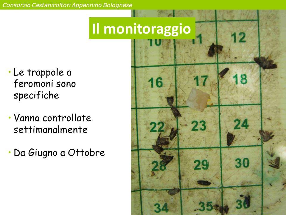 Il monitoraggio Le trappole a feromoni sono specifiche Vanno controllate settimanalmente Da Giugno a Ottobre Consorzio Castanicoltori Appennino Bologn