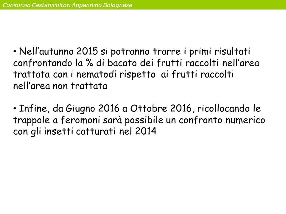 Consorzio Castanicoltori Appennino Bolognese Nell'autunno 2015 si potranno trarre i primi risultati confrontando la % di bacato dei frutti raccolti ne