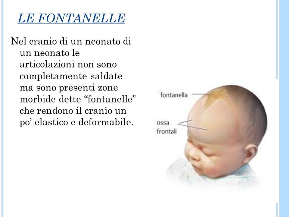 """LE FONTANELLE Nel cranio di un neonato di un neonato le articolazioni non sono completamente saldate ma sono presenti zone morbide dette """"fontanelle"""""""