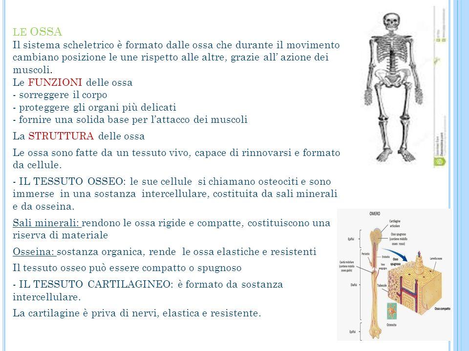 LE OSSA Il sistema scheletrico è formato dalle ossa che durante il movimento cambiano posizione le une rispetto alle altre, grazie all' azione dei mus