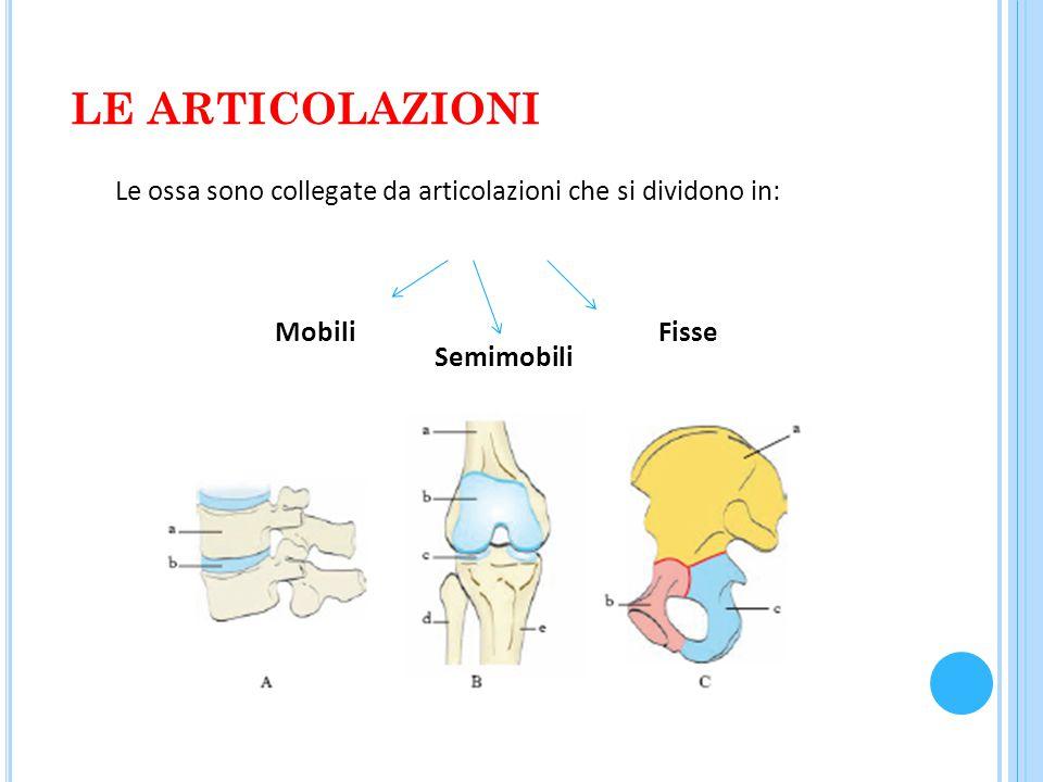 LE ARTICOLAZIONI Le ossa sono collegate da articolazioni che si dividono in: Mobili Semimobili Fisse
