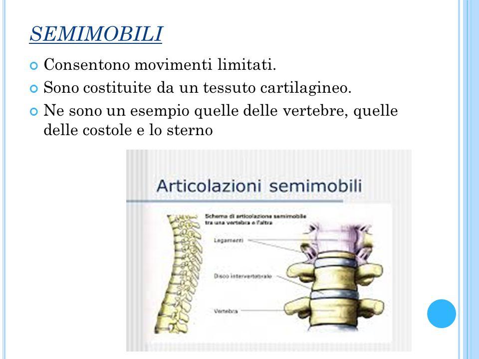 SEMIMOBILI Consentono movimenti limitati. Sono costituite da un tessuto cartilagineo. Ne sono un esempio quelle delle vertebre, quelle delle costole e