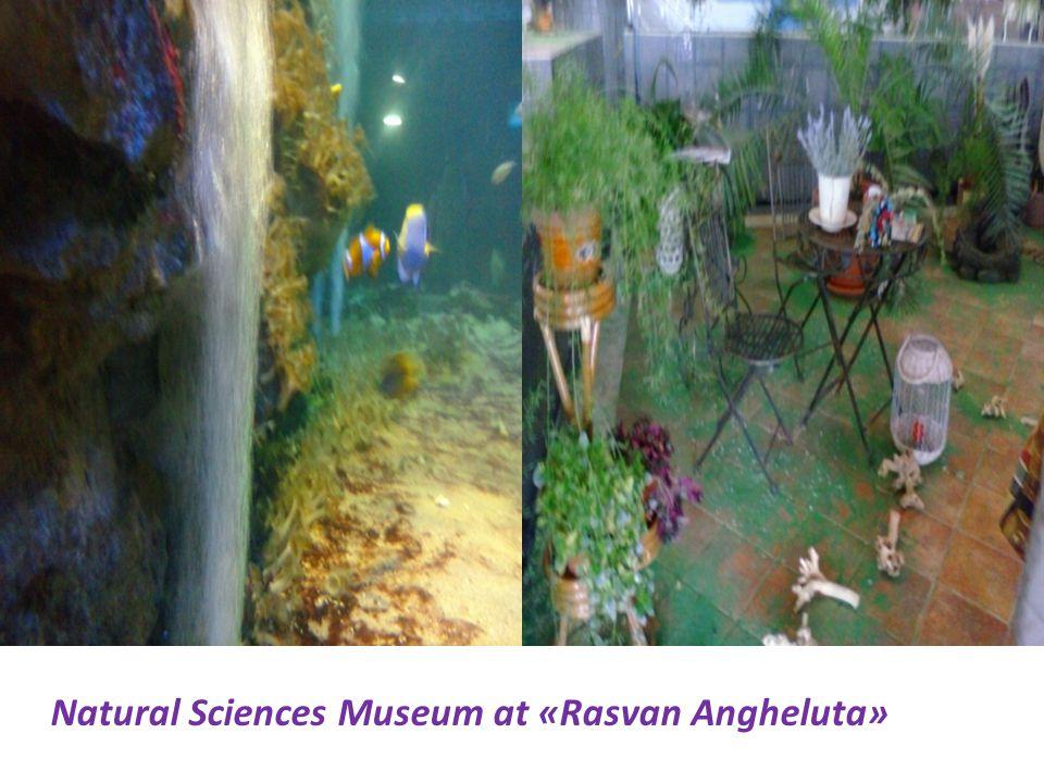 Natural Sciences Museum at «Rasvan Angheluta»