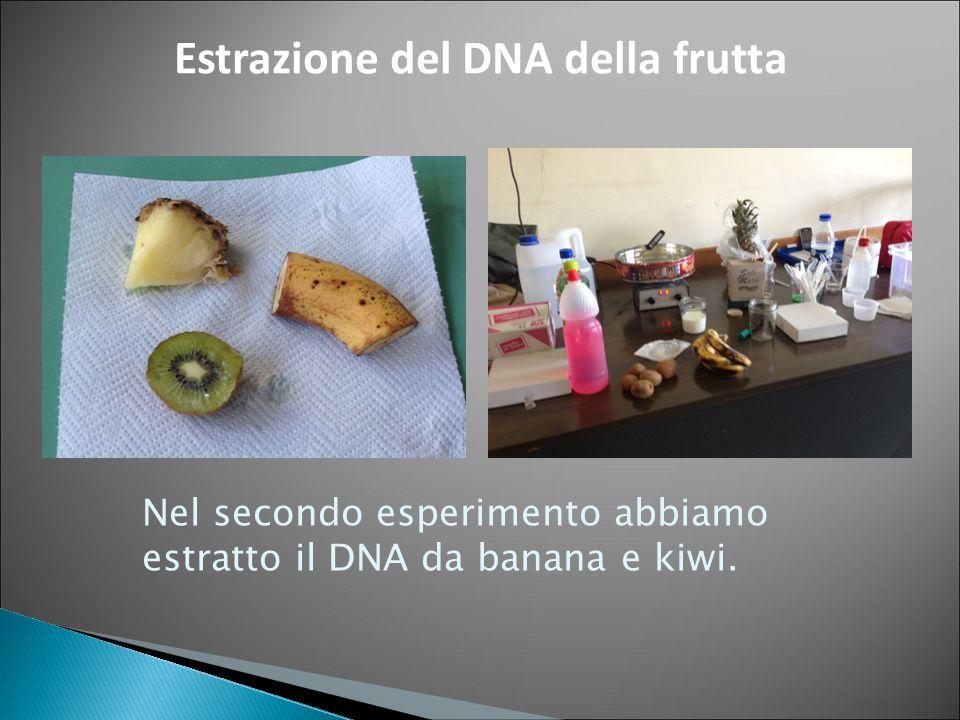 Estrazione del DNA della frutta Nel secondo esperimento abbiamo estratto il DNA da banana e kiwi.
