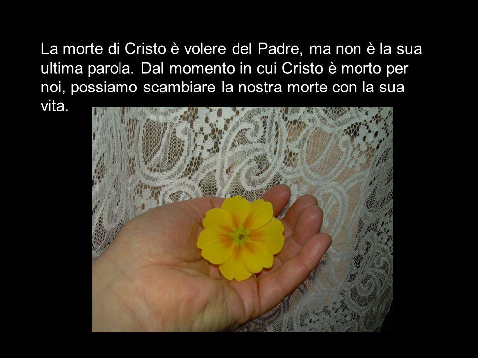 La morte di Cristo è volere del Padre, ma non è la sua ultima parola.
