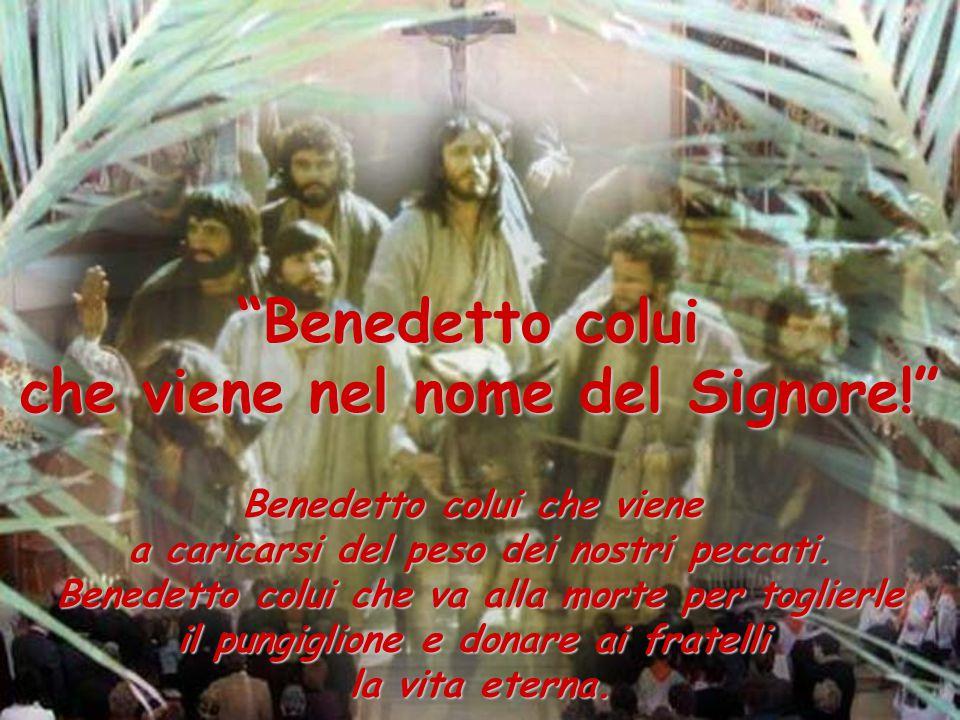 Benedetto colui che viene nel nome del Signore! Benedetto colui che viene a caricarsi del peso dei nostri peccati.