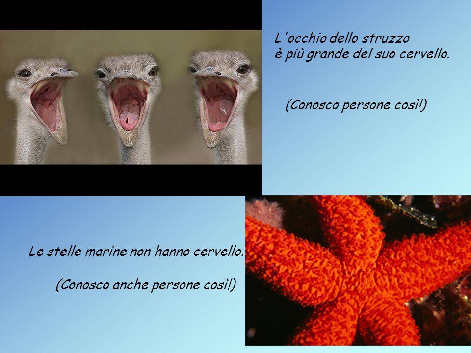 Le stelle marine non hanno cervello. L occhio dello struzzo è più grande del suo cervello.