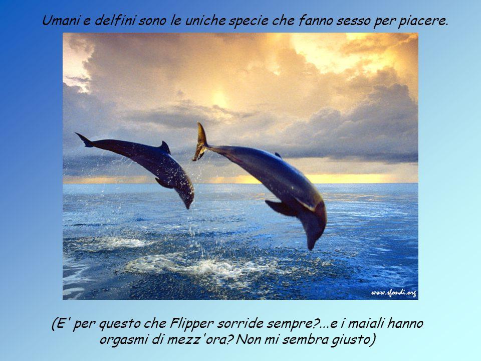 Umani e delfini sono le uniche specie che fanno sesso per piacere.