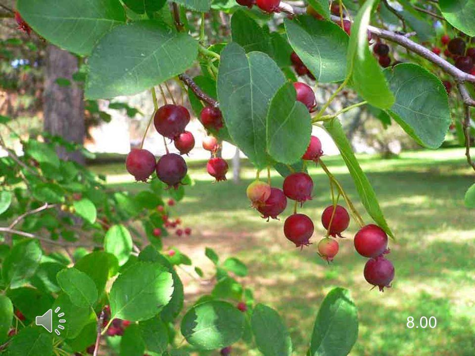 Il giovane, infatti, è come un albero in crescita: per svilupparsi bene ha bisogno di radici profonde, che, in caso di tempeste di vento, lo tengano ben piantato al suolo.