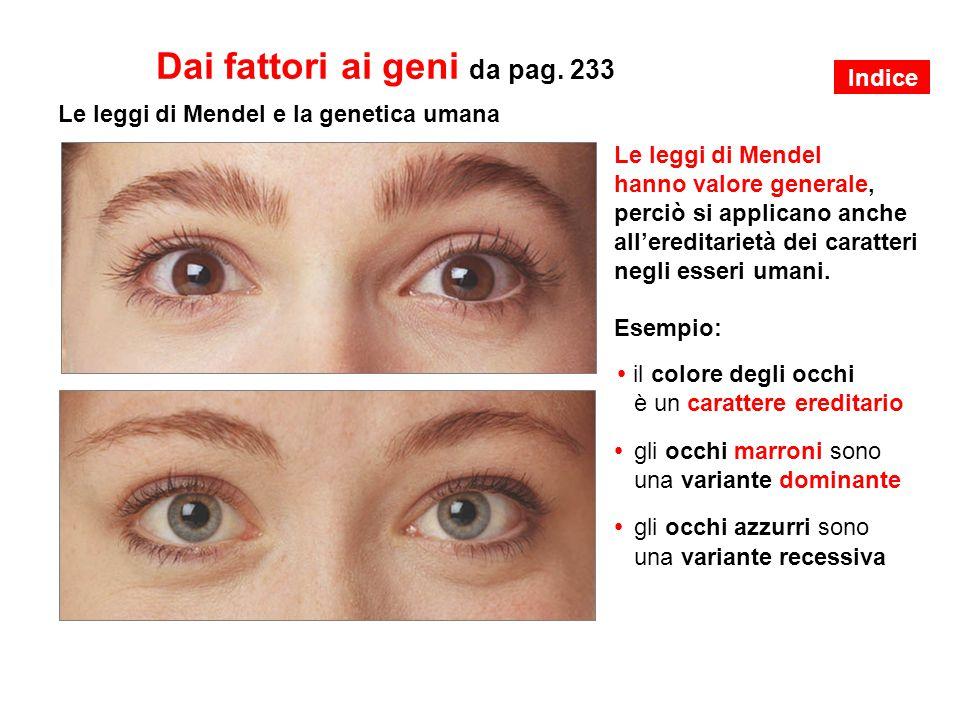 Le leggi di Mendel e la genetica umana Le leggi di Mendel hanno valore generale, perciò si applicano anche all'ereditarietà dei caratteri negli esseri