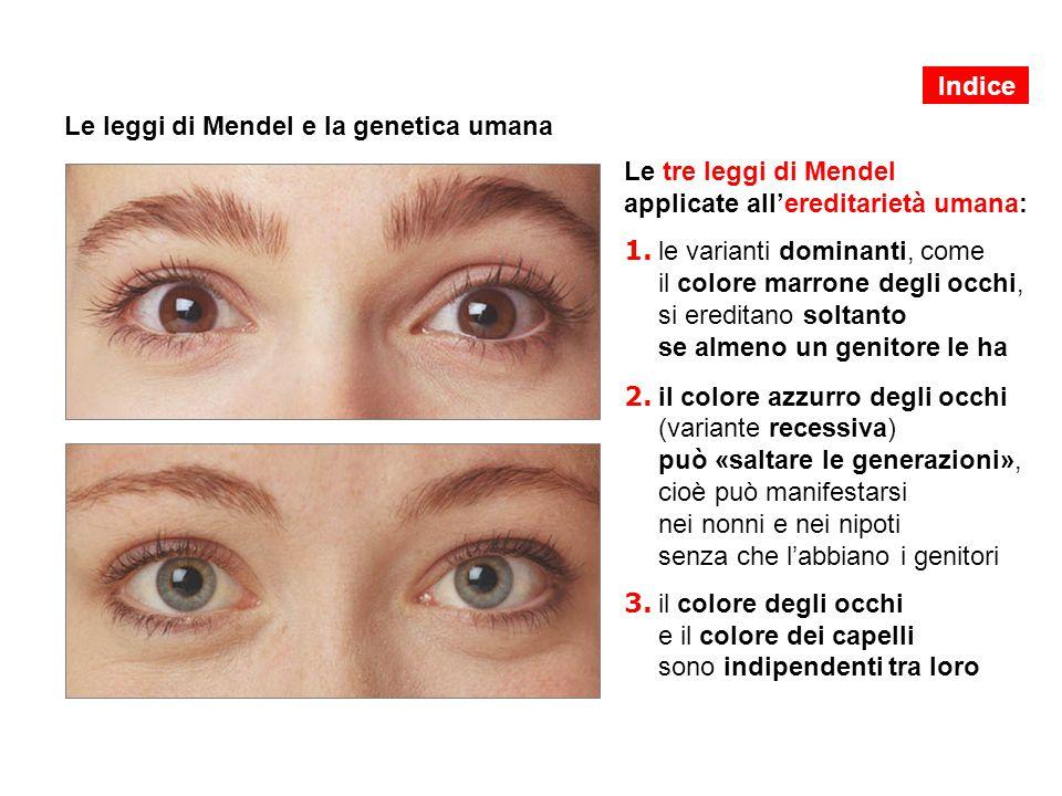 Le leggi di Mendel e la genetica umana Le tre leggi di Mendel applicate all'ereditarietà umana: 1. le varianti dominanti, come il colore marrone degli